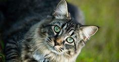 Cómo hacer un refugio para gatos en el jardín. Muchos dueños de gatos prefieren mantener a sus mascotas dentro de la casa para mantenerlos a salvo de enfermedades, depredadores y el tráfico. El promedio de vida de un gato al aire libre es de cinco años, mientras que los gatos de casa viven un promedio de 15 años, según la Stanford Cat Network. Hay jaulas para gatos que se usan al aire libre y ...