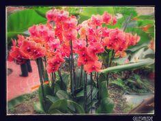 orchidées - null