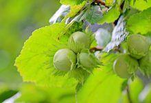 Obyčejné droždí je jedním z nejúčinnějších prostředků pro silné a lesklé vlasy - FarmaZdravi.cz Seed Catalogs, Wild Edibles, Healthy Kids, Amazing Gardens, Onion, Seeds, Garden Fun, Gardening, Autumn