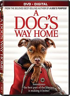 Amazon Com 0043396541429 Movies Tv Cute Dog Pictures A Dogs Purpose The Sweetest Thing Movie