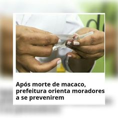 ATENÇÃO  UTILIDADE PUBLICA Se encontrar algum macaco morto, não descarte!   Ribeirão Preto: Ligue para 16 3628.2015 ou 3626.6596 inclusive sábados, domingos e feriados que funcionários irão buscar o animal.