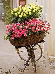 Pink and yellow Roses. Ana Rosa