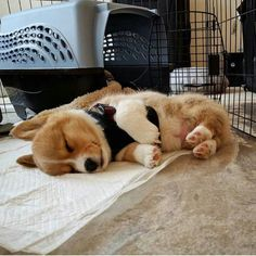 """8,005 mentions J'aime, 29 commentaires - Baby 