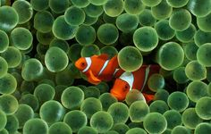 Обои картинки фото макро, мокро, рыбки, рыбы, водоросли