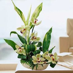 Cymbidium Orchids Green with cordyline foliage table arrangement Online Flower Shop, Flowers Online, Green Orchid, Green Flowers, Ikebana Flower Arrangement, Flower Arrangements, Tropical Floral Arrangements, Different Kinds Of Flowers, Floral Arrangements