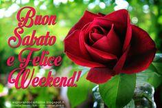 +++Buon+Sabato+e+Felice+Weekend%21+FIORI-FOTO.jpg (1063×709)