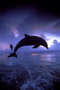 Un dauphin merveilleux
