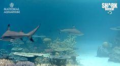 Blacktip Reef Shark Cam: Watch Our New Exhibit In Action!