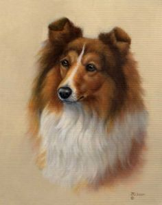 Illustration by: J. Gibson : from the ears I'm picking Sheltie over Collie Animal Paintings, Animal Drawings, Animals And Pets, Cute Animals, Especie Animal, Sheltie, Dog Portraits, Dog Art, Painting & Drawing