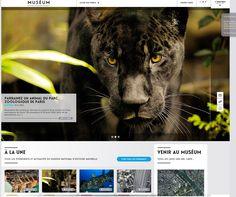 Zoo // grid