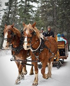 Lone Mountain Ranch Offers A Magical Sleigh Ride Dinner In Montana