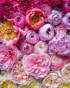 Flower wall ombre