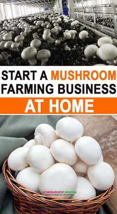 Are you planning to start mushroom farming business at home? If yes, then it is right place for you to learn everything about mushroom farming business. Mushroom farming business can be mean big profits in just few weeks. Grow Your Own Mushrooms, Growing Mushrooms At Home, Garden Mushrooms, Organic Gardening, Gardening Tips, Organic Farming, Farm Business, Business Ideas, Mushroom Cultivation