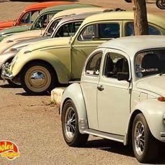 #vw #aircooled #bug #beetle #fusca #vwbug #volks #volkswagen #belohorizonte #classic #vintage #vintagecar #oldschool #classiccar