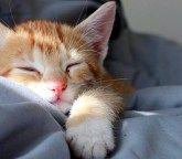 恐怖のあまりジャケットの中に隠れていた子猫。保護して数時間後に見せた姿がとっても可愛くて… (7枚)