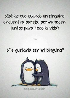 Did you know that when a penguin finds its pair that they stay together for life? Do you want to be my penguin?