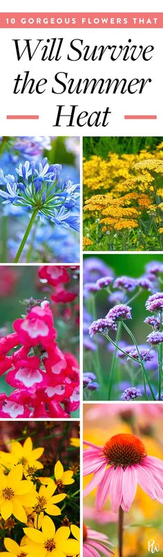 10 Gorgeous Flowers That Will Survive the Summer Heat  #purewow #home #gardens