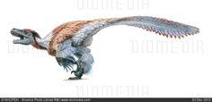 Dromaeosaurus dinosaur, artwork - stock photo