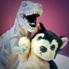 Schoolwear Plus in Chelmsford, Essex set up a Lost & found in their store for toys left behind. Currently Rex the t-rex and Wolf the stuffed wolf are there, and despite being instant best friends, they really want to get back home to their families. more info: https://www.facebook.com/media/set/?set=a.464533486993712.1073741834.131863826927348 Contact: https://www.facebook.com/SchoolwearPlus or https://www.facebook.com/TeddyBearLostAndFound