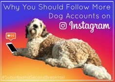 Why You Should Follow More Dog Accounts on Instagram #SuburbsandSecondBreakfast #lifestyle #personal #blog #dogs #instagram #happiness #smile