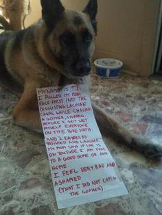 Shamed Dog, TJ, the gopher hunter: image via dog-shaming.com/