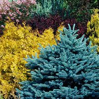 Best of the Midwest Landscape Plants