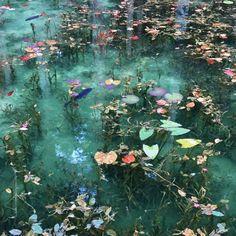 Monet's Pond, Seki City, Gifu Prefecture, Japan - my inspiration - Blumen Gifu, Nature Aesthetic, Flower Aesthetic, Claude Monet, Aesthetic Pictures, Wall Collage, Faeries, Pretty Pictures, Art Inspo