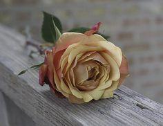 Rose on Wood Railing