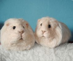 Needle Felted Long Haired Guinea Pig - Needle Felted Pet Sculpture - Custom Made by willane on Etsy https://www.etsy.com/listing/182739591/needle-felted-long-haired-guinea-pig