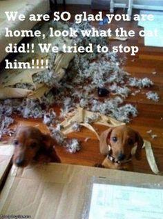 Wiener dog mischief