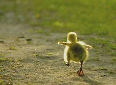 Duck#alone
