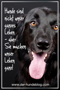 Tolle neue Sprüche und Zitate über und mit Hunden. Schaut auf dem www.der-hundeblog.com vorbei und entdeckt die neuen Karten im Menü unter: Sprüche #hundezitate #hundesprüche #kartenmithunden #hunde #zitate #sprüche