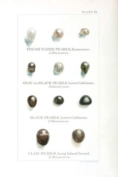 Pearls together with their occurrence in North America, 1898. Washington.