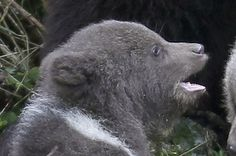 Meet Casey And Brutus: The Man/Bear Bromance LOVE THIS!
