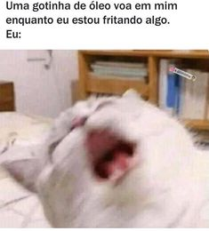 Funny Spanish Memes, Spanish Humor, Stupid Funny Memes, Funny Quotes, Memes Status, Memes Br, Lol, Animal Memes, Best Memes