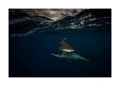 A Parallel Universe: My Half-Underwater Pics Show What Hides Beneath The Waves Under The Water, Under The Sea, Underwater Images, Underwater World, Alien Creatures, Sea Creatures, Underwater Photography, Animal Photography, Silky Shark