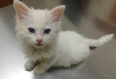 This Man Wasn�t Even A Cat Person Until A Deaf Kitten Stole His Heart!