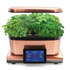 AeroGarden Harvest Touch with Gourmet Herbs Seed Pod Kit, Copper | Sur La Table