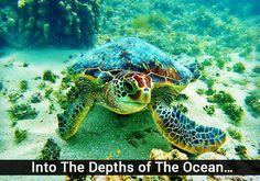 Swim to the depths o