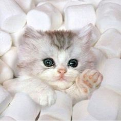 Too Cute! - Click to see the loads of great pictures of cats and kittens that will definitely bring a smile to your face.