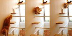 Cat House Ideas