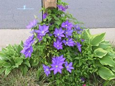 Garden Ideas Around Mailbox decorate your mailbox with vines, shrubs and flowers | container