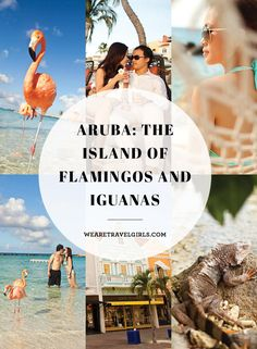 """ARUBA: THE ISLAND OF FLAMINGOS AND IGUANAS Recently I have seen a lot of pictures of Aruba on my Instagram feed. Pictures of gorgeous traveling girls with beautiful flamingos on the beach have shown up in countless popular hashtags. However, it's not like you step on the island of Aruba and you see flamingos and iguanas everywhere. There are certain """"secrets"""" behind these beautiful photos. In this post, I will reveal my 3 top photography spots in Aruba. By We Are Travel Girls Contributor May…"""