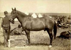 Comanche was a mixed Mustang/Morgan horse who survived General George Armstrong Custer's detachment of the United States 7th Cavalry at the Battle of the Little Bighorn.