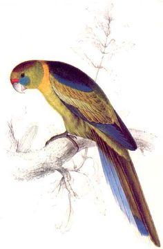 edward lear birds - Google Search