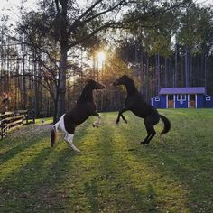 Snapped a pic of my cousin's horses as they were bucking up at each other for a Thanksgiving rumble.