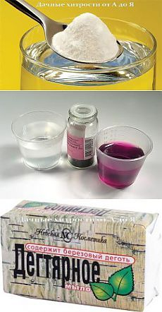 в помощь дачнику зеленая аптека