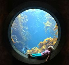Photograph by Royce Hutain (dopplerizer on reddit) | Facebook Father and redditor dopplerizer captured this smile-inducing scene of his daughter at the Monterey Bay Aquarium in Monterey, California. sitting-in-circular-window-at-the-aquarium