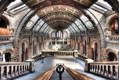 Amazing photo of the Natural History Museum in London.