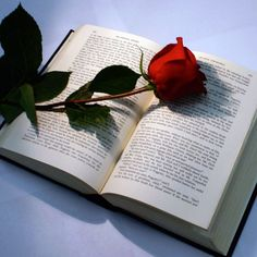 Rose with book by skait on DeviantArt Book Wallpaper, Wallpaper Iphone Cute, Aesthetic Iphone Wallpaper, Colorful Wallpaper, Flower Wallpaper, Aesthetic Wallpapers, Beautiful Flowers Wallpapers, Beautiful Roses, Cute Wallpapers